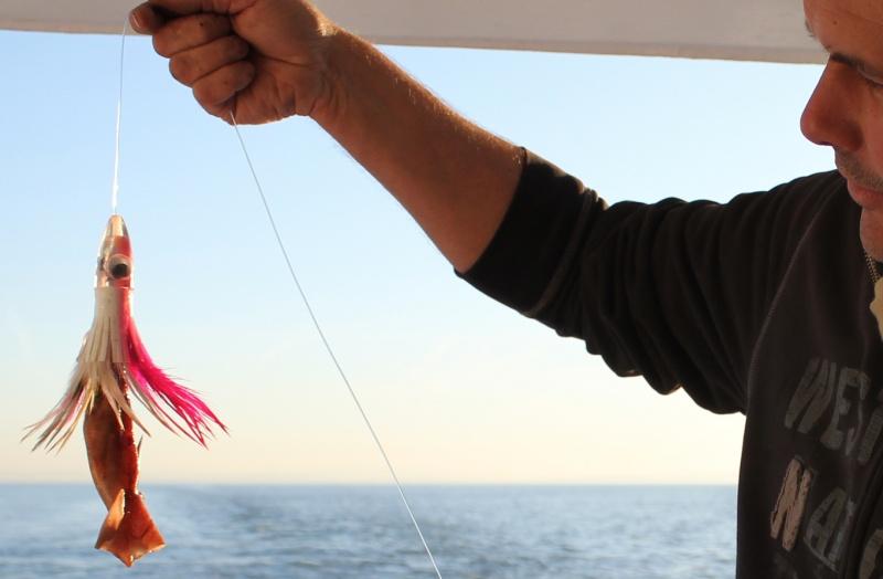 leurre pour le thon
