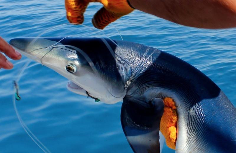 peche au gros requin