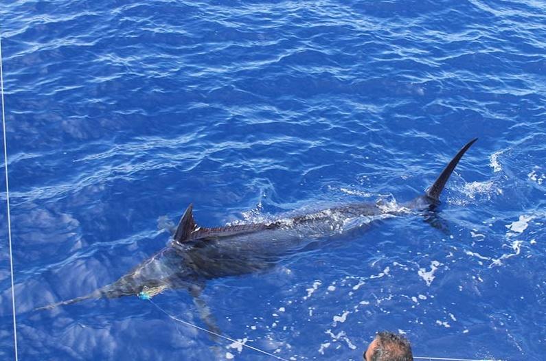 Pêche à l'espadon à l'Ile Maurice