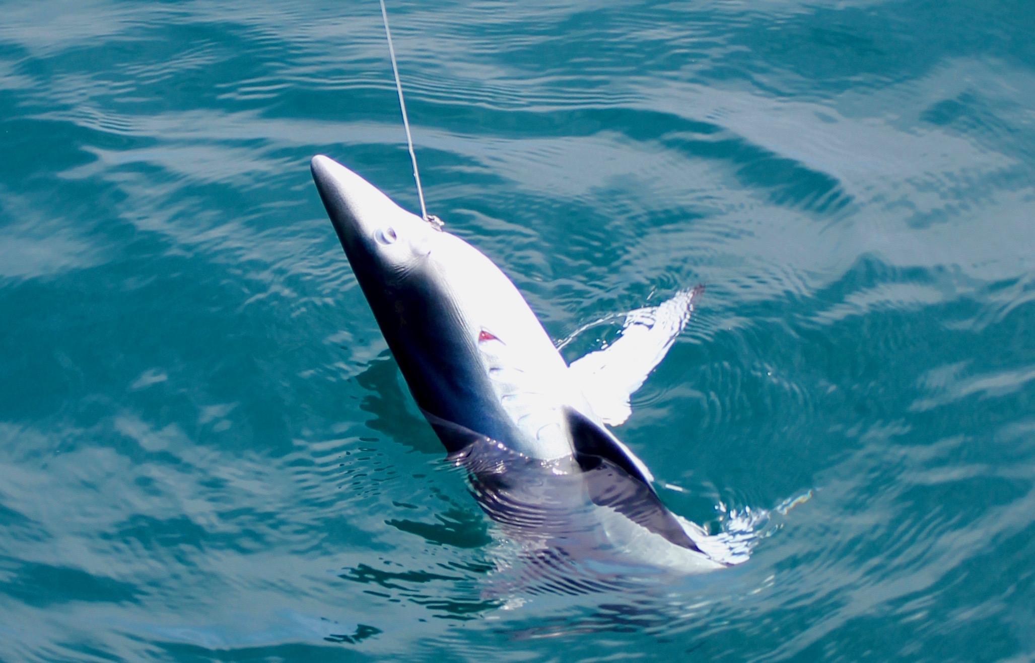 peche au requin