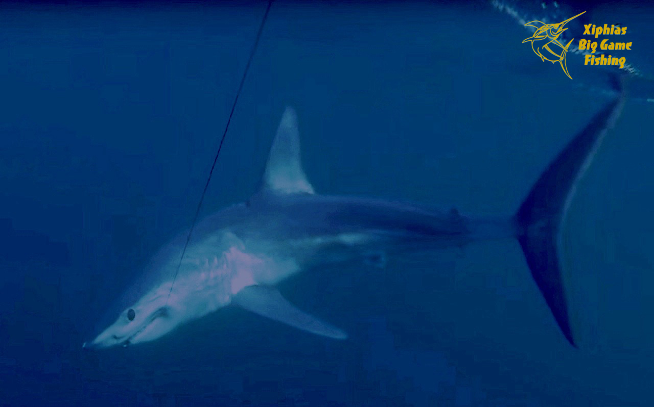 shark-fishing-portugal-mako